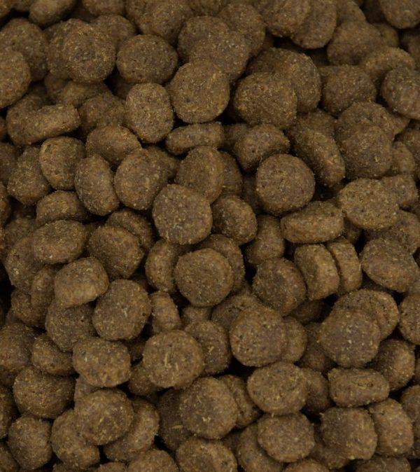Grain free pet food with salmon kibble